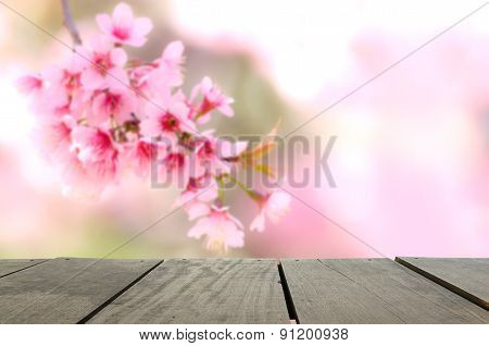 Defocus And Blur Background Of Terrace Wood And Spring Cherry Bl