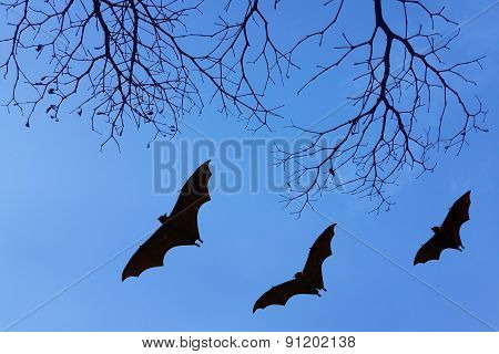 Bats Silhouettes And Beautiful Branch For Background Usage