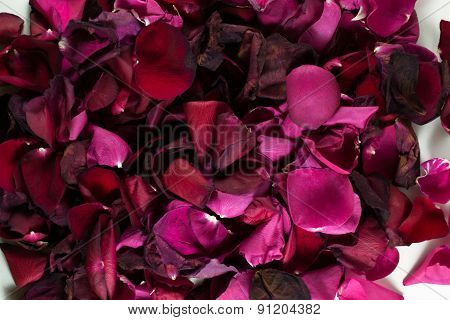 Closeup Of Many Dying Red Rose Petals