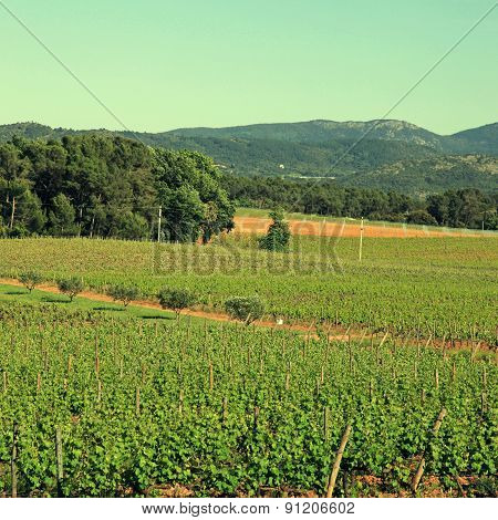 French Vineyard, Provence