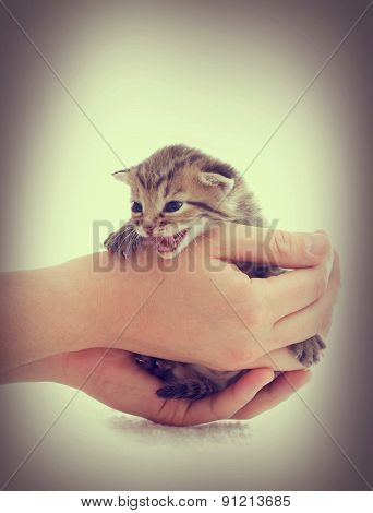 Kitty In Hands