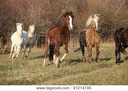 Batch Of Horses Running In Autumn