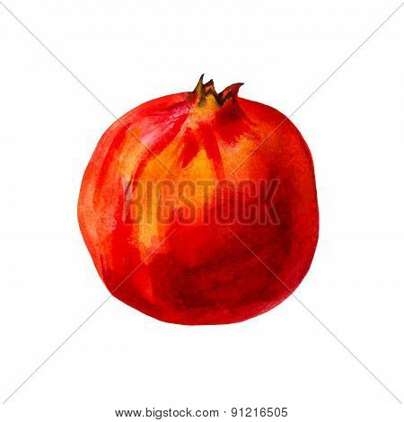 Realistic watercolor illustration pomegranate isolated on white background vector