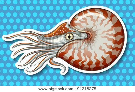 Closeup sea creature on blue polka dot background