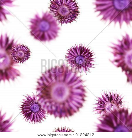 Seamless dried flowers pattern