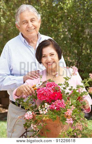 Senior Hispanic Couple Working In Garden Tidying Pots