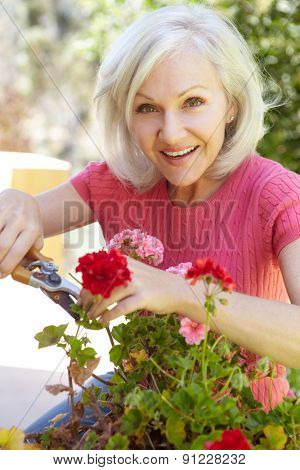 Mid age woman pruning geraniums