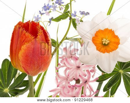 Beautiful Spring Flowers In Bright Bouquet