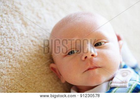 Portrait 7 week old baby
