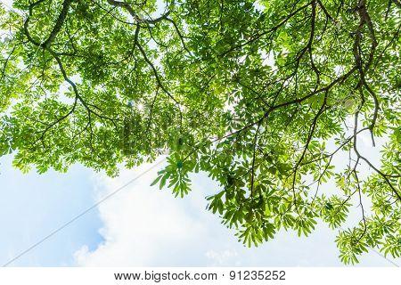 Fresh Green Leaves Under The Skies