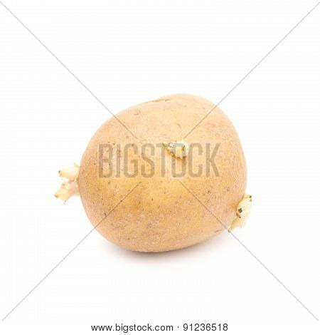 Brown potato with sprouts