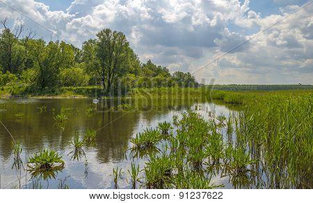 Swan swimming in a sunny lake in spring