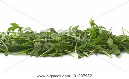 Eruca sativa rucola rocket salad