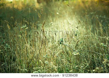 Autumn Meadow Illuminated By Sunlight.