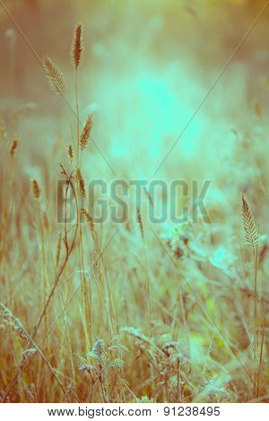 Meadow Illuminated Soft Sunlight.