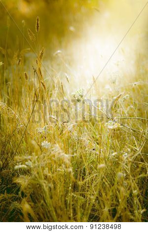 Meadow Illuminated By Sunlight. Grass Covered With Fine Frost.