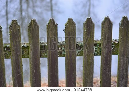 Old Fence, Covered With Moss