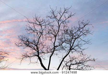 Beautiful pink sky with a tree without leaves at front