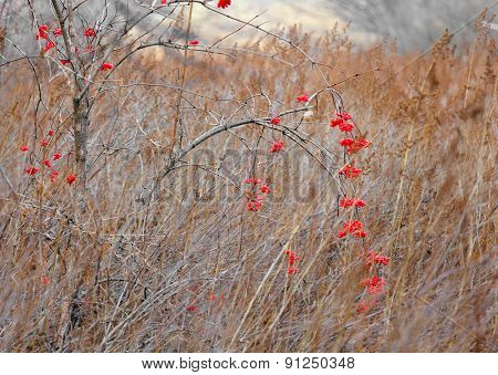Red flower in forest during autmn season