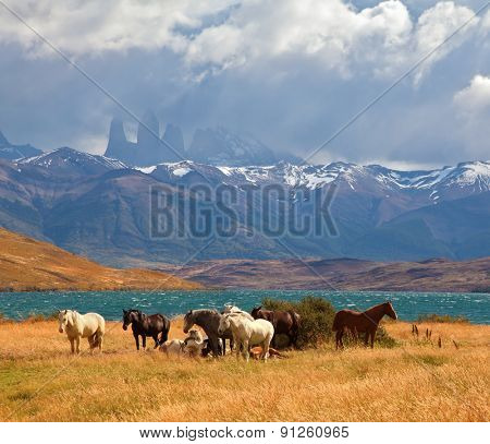 Chilean Andes. Fabulous lake Laguna Azul. Distance are seen three rocks Torres del Paine. 