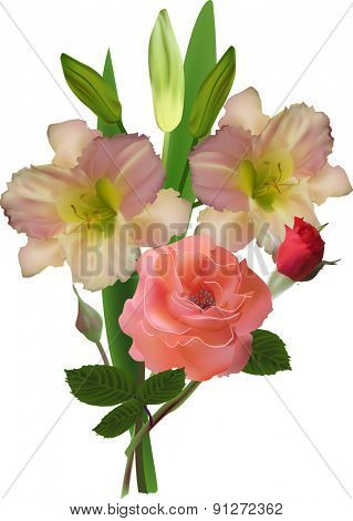 illustration with cream lily and pink rose isolated on white background