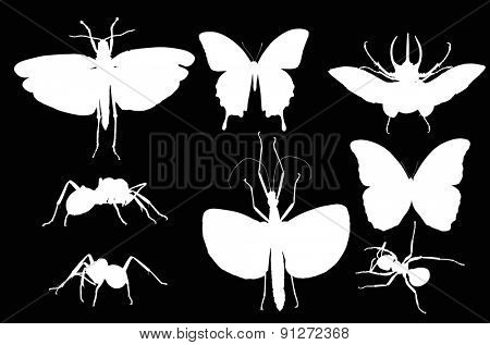 illustration with insect silhouettes isolated on black background