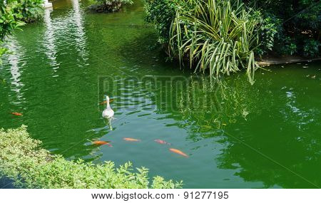HONG KONG - APRIL 16, 2015: pound with birds in Kowloon Park. Kowloon Park is a large public park in Tsim Sha Tsui, Kowloon, Hong Kong. It has an area of 13.3 hectares