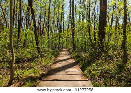 Forest in spring, details of European landscape