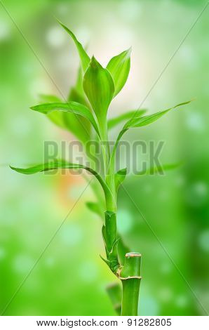 Fresh bamboo on green background