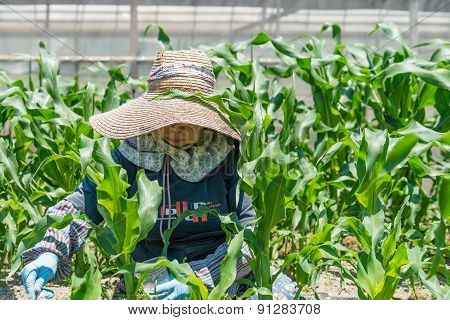 Elderly Japanese Woman Gardening