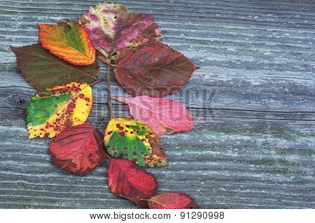 Board With Autumn Leaves Concept Flower