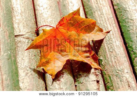 Autumn Maple Leaf On Bench