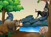foto of wombat  - Different kind of animals by the river bank - JPG