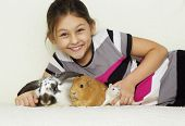 foto of guinea pig  - child and a set of rodents guinea pig rabbit rat - JPG
