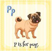 image of pug  - Flashcard alphabet P is for pug - JPG