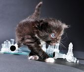 image of board-walk  - Studio shot of small black kitten walking across glass chess board with scattered pieces - JPG