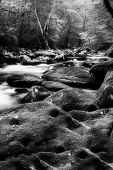 stock photo of smoky mountain  - Silky stream captured in the Smoky Mountains during springtime - JPG