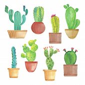 picture of cactus  - Watercolor hand drawn cactus set on white backgraund - JPG