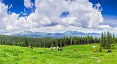 stock photo of mountain-range  - Mountain pasture with grazing horses against the backdrop of mountain range and sky with clouds - JPG