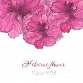 pic of hibiscus flower  - Watercolor painted  vector  hibiscus - JPG