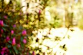 picture of azalea  - Bokeh photo of bright fuschia azaleas and wrought iron column - JPG