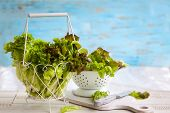 picture of wooden basket  - Various types of lettuce in a basket on the wooden table - JPG