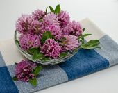 image of red clover  - A bunch of red clover flower heads in a glass bowl on a blue napkin ready to be dried for tea with space for text.