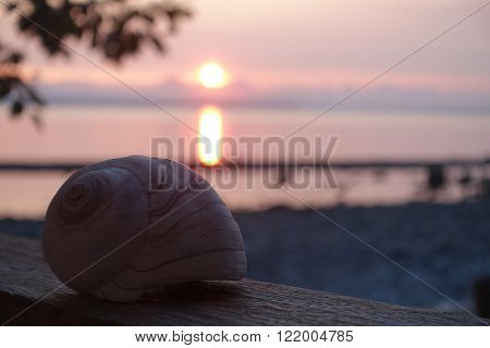 Picture of a shell ,taken at sunrise on Quadra island,BC,Canada.