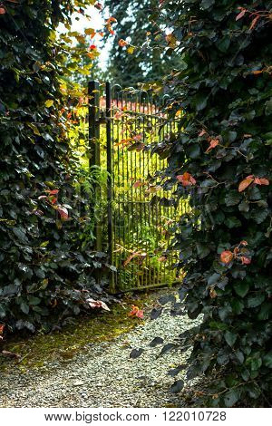 Beautiful old garden gate with hedges in the summertime