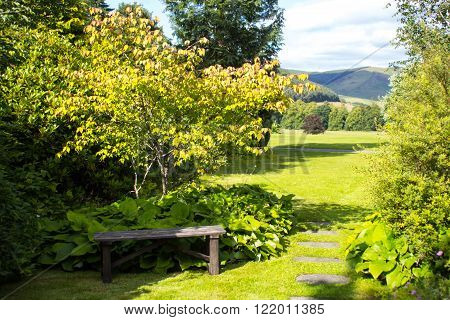 Wooden garden bench with green grass in the park