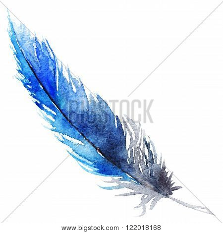 Watercolor single navy blue bird feather isolated