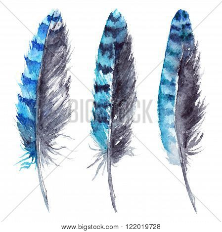 Watercolor black and blue jay feather set isolated
