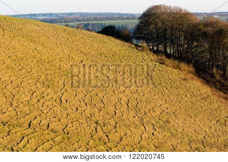 Cotley Hill at the end of winter. Ridges on the slopes of an ancient calcareous grassland and habitat of the rare marsh fritillary butterfly