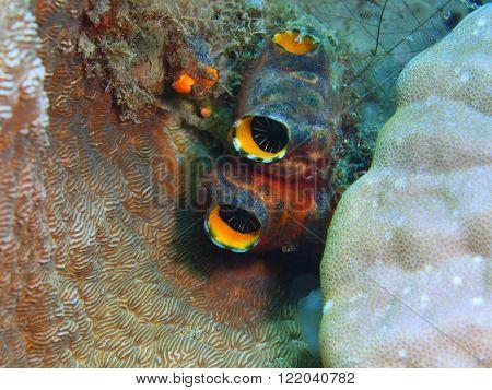 The surprising underwater world of the Bali basin, Island Bali, Pemuteran. Squirts